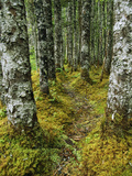 A Moss-Covered Trail Along the Copper River