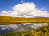 Cumulus Clouds Above Colorful Fall Tundra and Glacial Kettle Pond