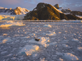 Leopard Seal Resting on Ice Flow with Glacier and Mountains Behind