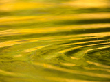 Green and Golden Reflections in Pond with Ripples Created by Animals
