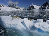 Crabeater Seals Dozing on Chunks of Ice in the Lemare Channel