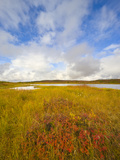 Tundra Kettle Ponds under Cumulus Clouds
