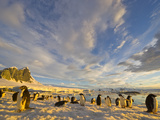 Adelie Penguins Resting on Coastal Snow Field under Cumulus Clouds