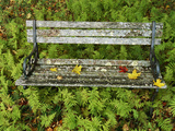 A Lichen-Covered Garden Bench Surrounded by Ferns