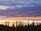 Black Spruce Trees Against Colorful Evening Sky in Autumn at Sunset