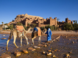 Camel Driver  Ait Benhaddou  Atlas Mountains  Morocco  Mr