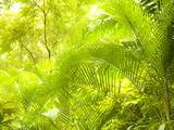 Singapore Botanic Gardens  Singapore