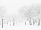 Winter  Saint Petersburg  Russia