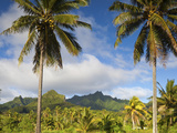 Rarotonga  Cook Islands  South Pacific