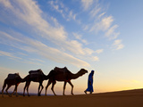Camel Driver  Sahara Desert  Merzouga  Morocco  (MR)