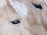 Close-Up of a HorseS Eye  Lapland  Finland