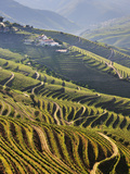 Terraced Vineyards in the Douro Region  a UNESCO World Heritage Site Portugal