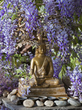 A Small Buddha Shrine Surrounded by Wisteria in Hotel Gangtey Palace  100-Year-Old Building  Once a