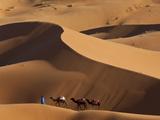 Camels and Dunes  Erg Chebbi  Sahara Desert  Morocco
