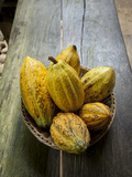 Costa Rica  La Virgen De Sarapiqui  Picked Cocoa Pods Used for Demonstration on How to Make Chocola