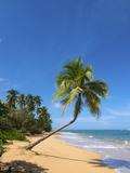 Tres Palmitas Beach  Loiza  Puerto Rico