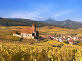 The Vineyards at Hunawihr  Alsace  France