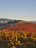 Italy  Umbria  Perugia District  Dawn over the Autumnal Vineyards Near Montefalco