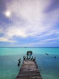 Venezuela  Archipelago Los Roques National Park  Madrisque Island  Pelicans on Pier