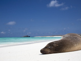 Ecuador  Galapagos  Sunbathing Sea Lion on the Stunning Beaches of San Cristobal  Galapagos