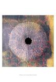 Seashell-Urchin