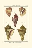 Pyrule Shells  Pl 434