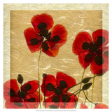 Greek Poppies I
