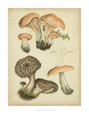 Antique Mushrooms I