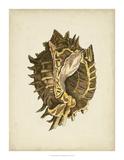 Sealife Collection VI