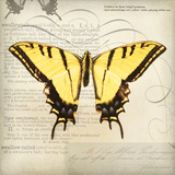 Butterflies Script V