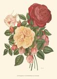 Vintage Roses I