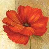 Papaver II