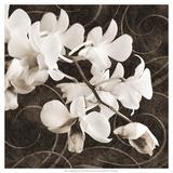 Orchid & Swirls II
