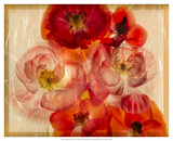 Papaver Dreams I