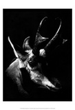 Wildlife Scratchboards II