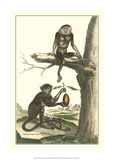 Macaque and Douc Monkeys
