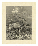 Vintage Roe Deer II