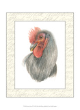 Rooster Insets IV