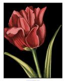 Vibrant Tulips IV
