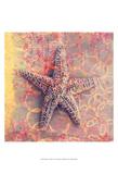 Seashell-Starfish