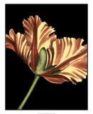 Vibrant Tulips I