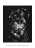 Canine Scratchboard XII