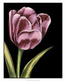 Vibrant Tulips III