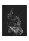 Canine Scratchboard III