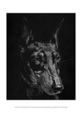 Canine Scratchboard XIII