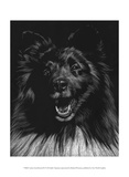 Canine Scratchboard IX