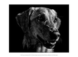 Canine Scratchboard XXIV