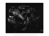 Canine Scratchboard XXVII