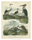 Heron &amp; Crane Species I