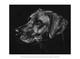Canine Scratchboard XXVIII